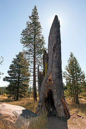 Point of Historic Interest in Tahoe National Forest ...