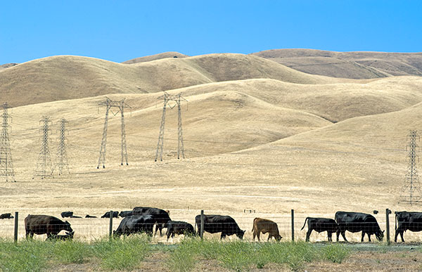 A Ranch At The Western Edge Of The San Joaquin Valley