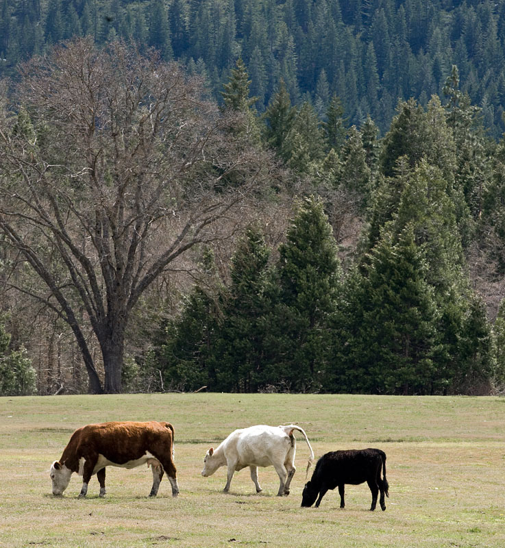 Scenic Route: Old Stage Road Near Mount Shasta City